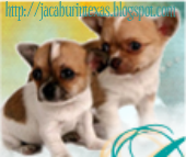 AFTER Series Giveaway and Guest Post on HOUSEWIFE BLUES AND CHIHUAHUA STORIES Blog